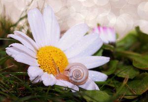 SnailFlower